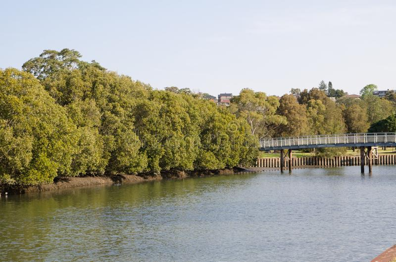 Piękna rzeka alongside z zielonym namorzynowym lasem z małym drewnianym zwyczajnym mostem przez rzekę zdjęcia royalty free