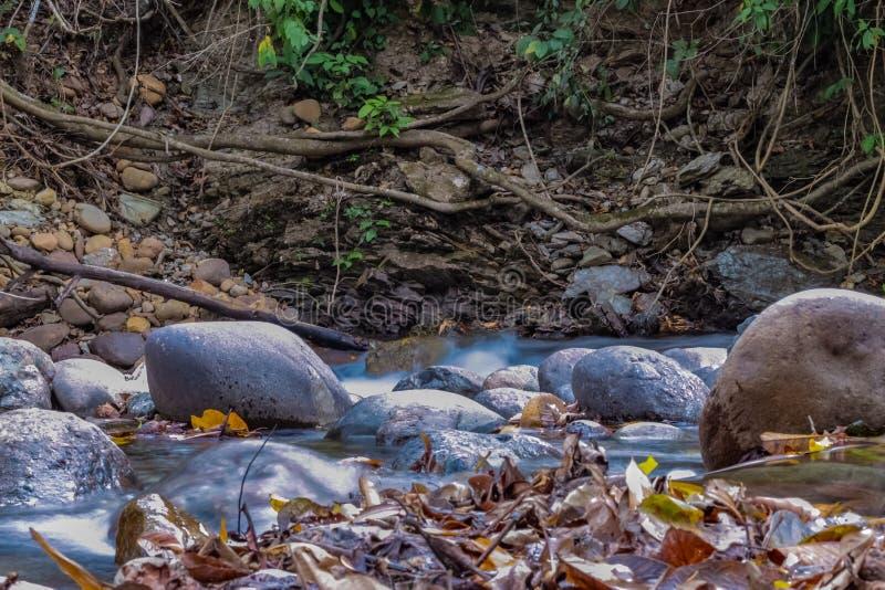 Piękna rzeka w Venezuela zdjęcie stock