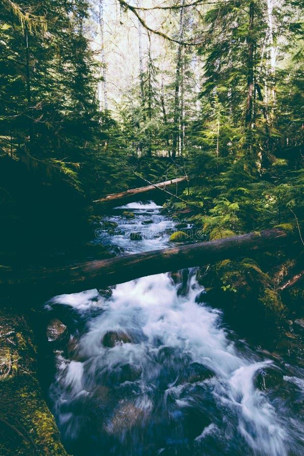 Piękna rzeka z silnym prądem w drewnach zdjęcia stock