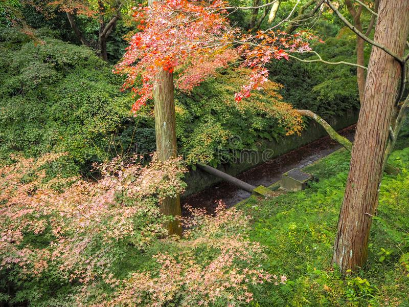 Piękna scena kolorowych jesieni i świeżych zielonych drzew w japońskim ogródku świątyni obraz royalty free