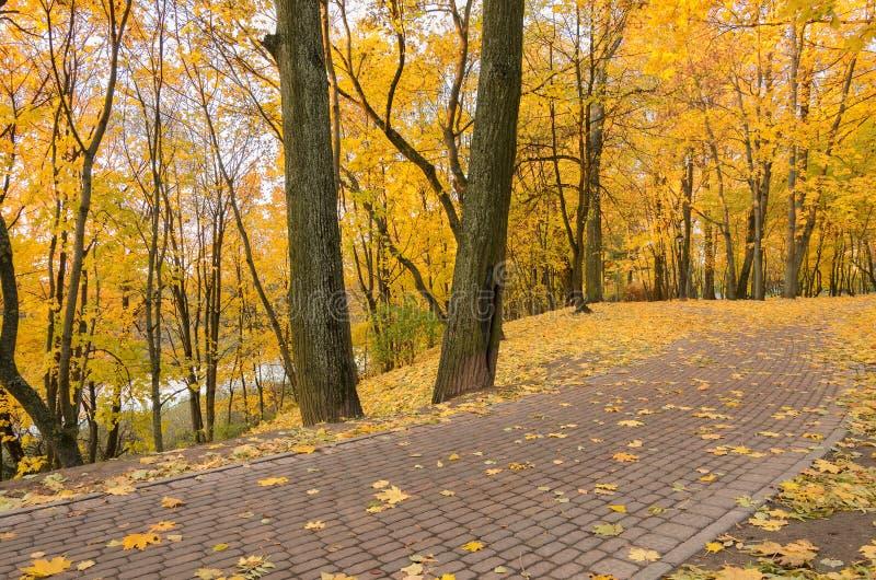 Piękna scena w jesień parku fotografia royalty free