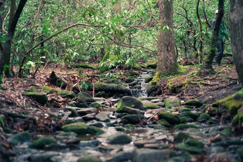 Piękna sceneria las z rzeką i mech na skałach fotografia royalty free