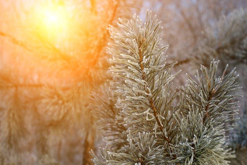 Piękna sceneria od natury podczas zimnego zima dnia Gałąź zakrywa z śniegiem i śnieg spada w zdjęcia royalty free