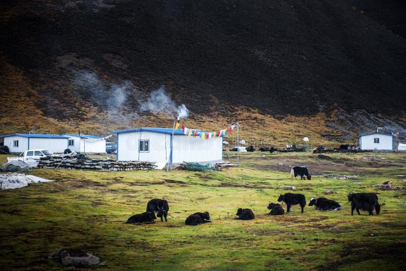 Piękna sceneria: Podróżować w Tybet zdjęcie royalty free