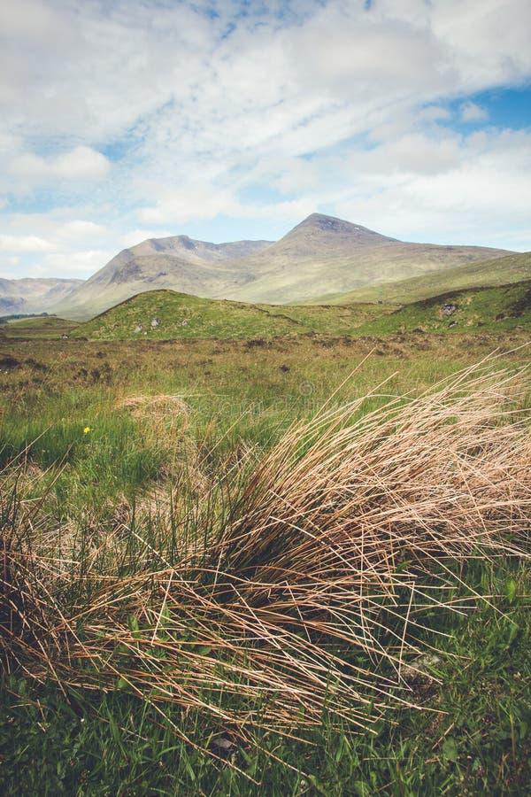 Piękna sceneria w szkockich higlands z długim dorośnięciem gr, zdjęcie stock