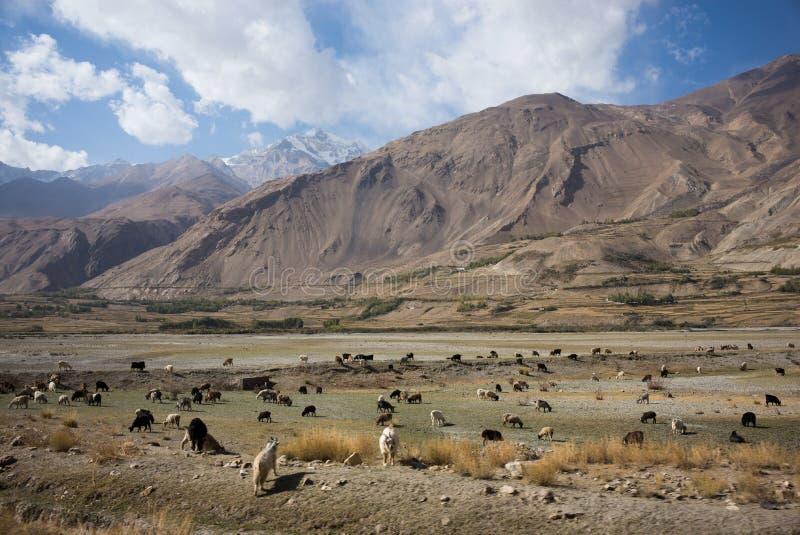 Piękna sceneria wzdłuż wycieczki samochodowej na Wakhan dolinie, Pamir autostrada, Tajikistan zdjęcia royalty free