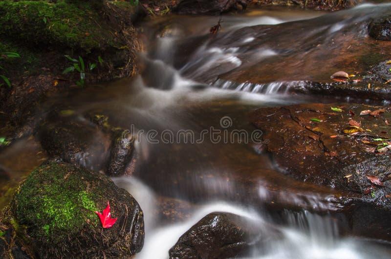 Piękna siklawa przy głębokim lasem fotografia stock