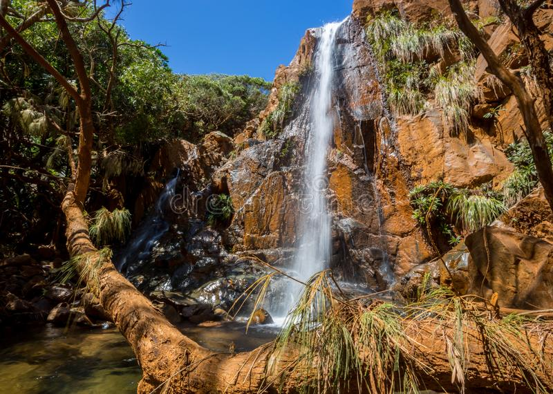 Piękna siklawa spada od ośniedziałej kolor falezy w wiecznozielonym lesie za sosną Nowy Caledonia, Melanesia, Oceania obrazy royalty free