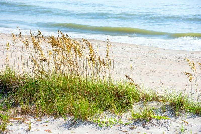 Piękna spokojna linii brzegowej plaży scena z dennymi owsami i delikatnymi fala zdjęcie stock