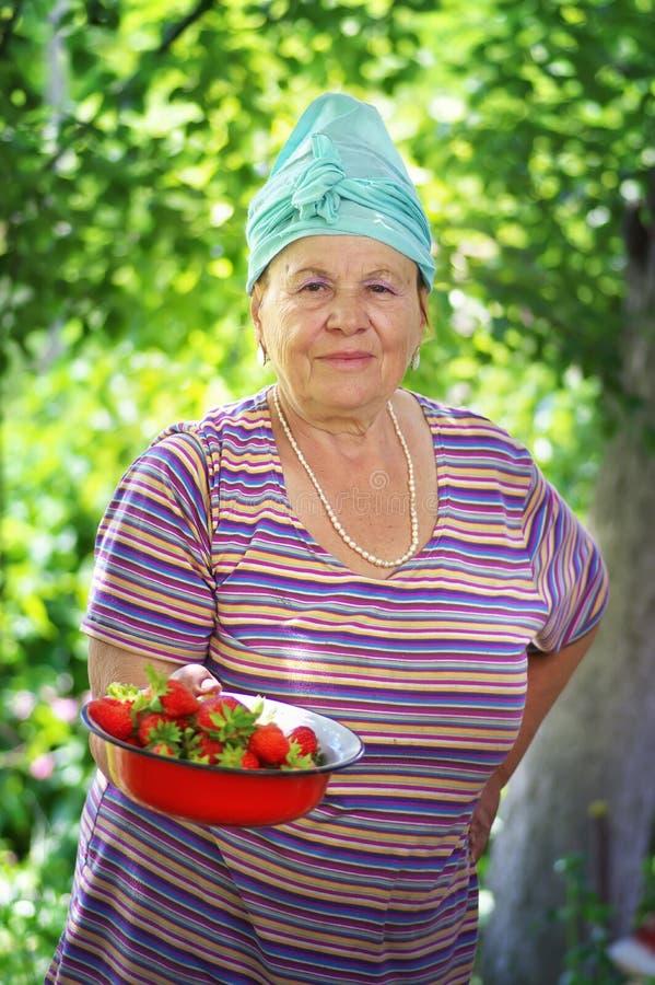 Piękna stara kobieta i Truskawkowy żniwo zdjęcia royalty free