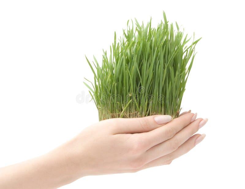 piękna trawa rośnie zdjęcia royalty free