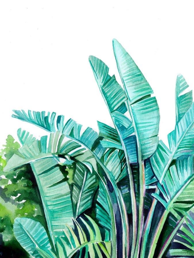 Piękna tropikalna ilustracja zielony bananowy drzewo opuszcza na białym tle ilustracji