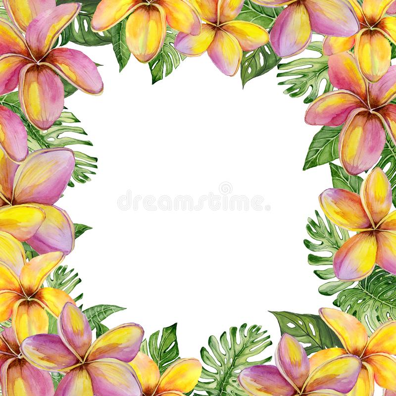 Piękna tropikalna kwiecista granica robić plumeria kwiaty i egzotów liście Kwadratowa rama z białym tłem dla teksta ilustracji