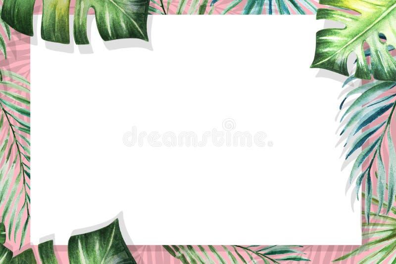 Piękna tropikalna liść granicy rama Monstera, palma adobe korekcj wysokiego obrazu photoshop ilo?ci obraz cyfrowy prawdziwa akwar ilustracja wektor