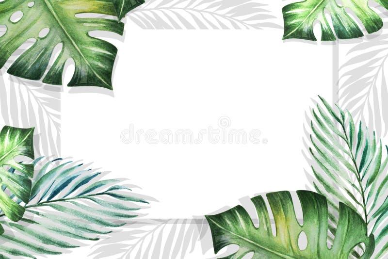 Piękna tropikalna liść granicy rama na białym tle Monstera, palma adobe korekcj wysokiego obrazu photoshop ilo?ci obraz cyfrowy p royalty ilustracja