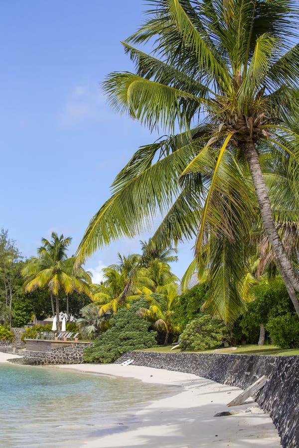 Piękna tropikalna plaża, kokosowy drzewko palmowe i błękitna woda morska w wyspie Mauritius, obraz royalty free