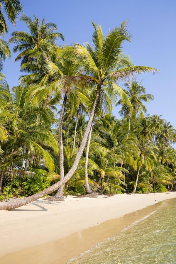 Piękna tropikalna plaża, kokosowy drzewko palmowe i czysta woda morska w Tajlandia, obrazy royalty free