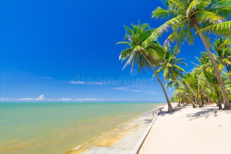 Piękna tropikalna plaża z kokosowymi drzewkami palmowymi obrazy stock
