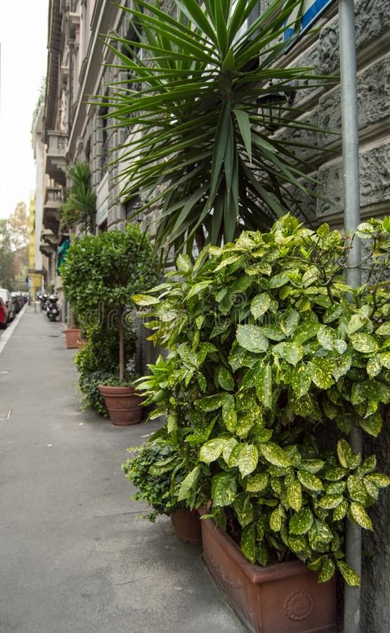 Piękna ulica, kwiatów garnki z zielonymi roślinami blisko szarej kamiennej ściany, Włochy, MEDIOLAN zdjęcia stock