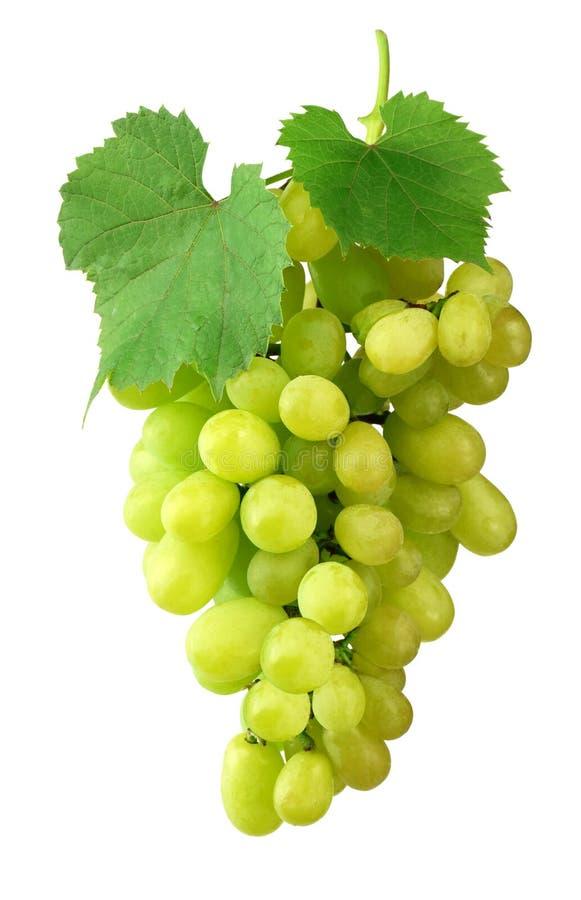 Piękna wiązka dojrzali winogrona i zieleni liście, odosobniona na a obraz stock