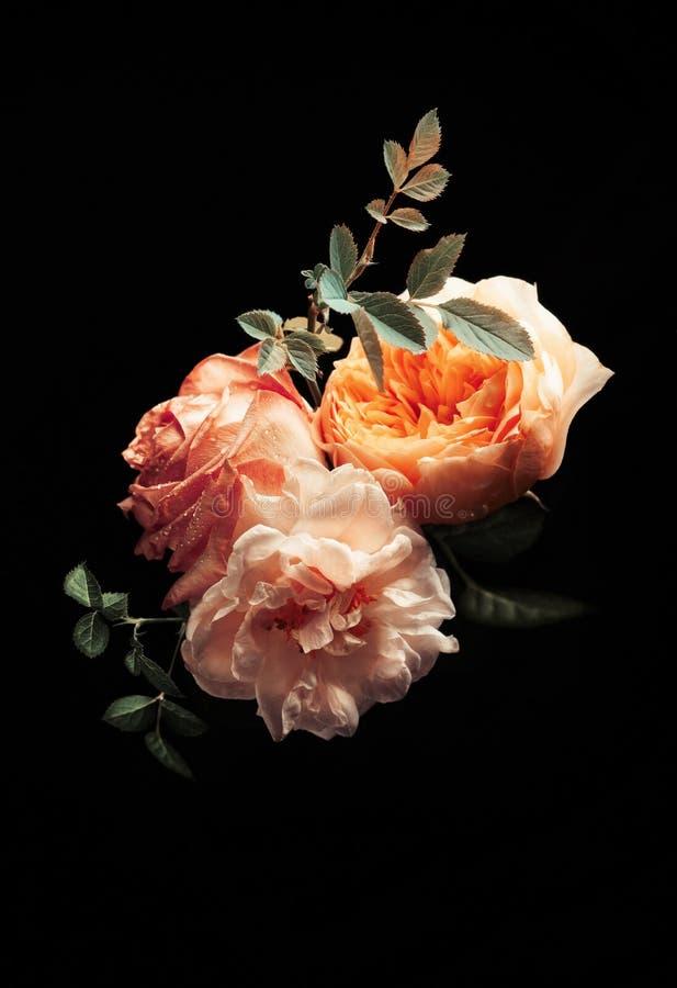 Piękna wiązka kolorowe róże kwitnie na czarnym tle zdjęcie stock