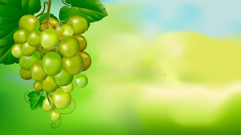 Piękna wiązka winogrona na zamazanym zielonym tle ilustracja wektor