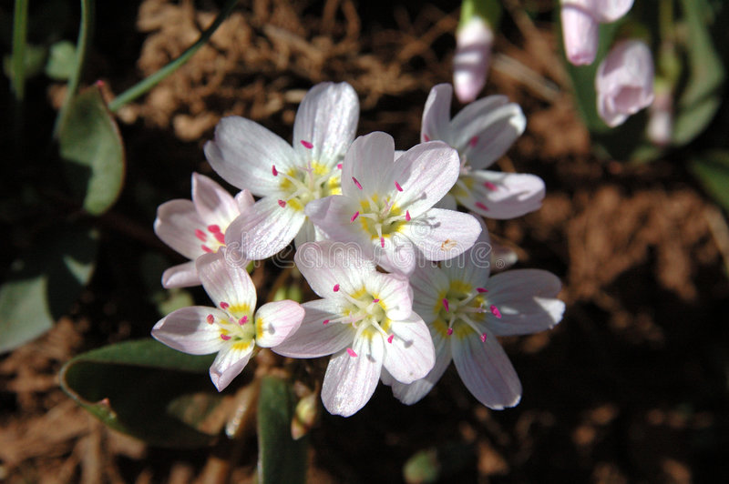 piękna wiosna fotografia stock