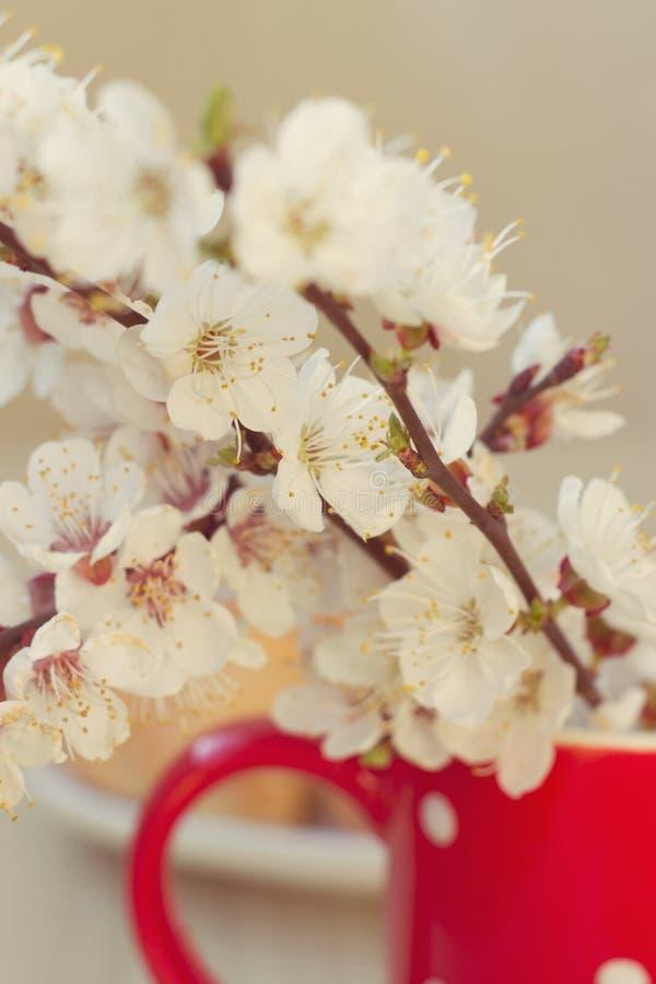 Piękna wiosna kwitnie w kubku. fotografia royalty free