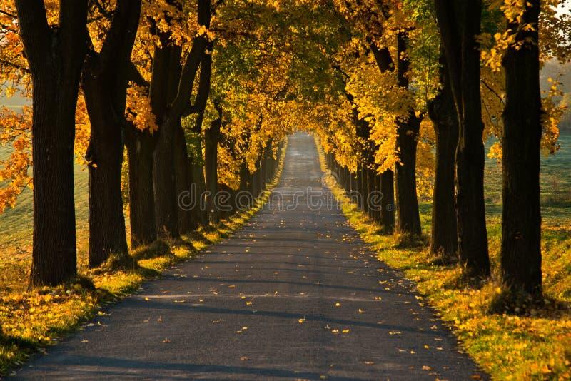 Piękna złota jesieni aleja obrazy royalty free
