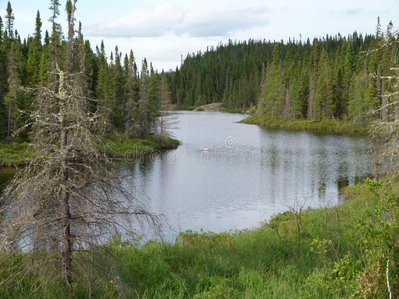 Piękna zatoczka i las na letnim dniu blisko Wawa Ontario Kanada zdjęcie stock