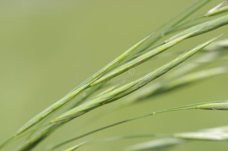 piękna zieleń obraz royalty free