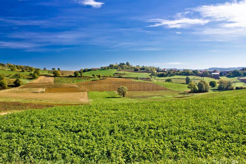 Piękna zielona natura pod niebieskim niebem zdjęcie royalty free