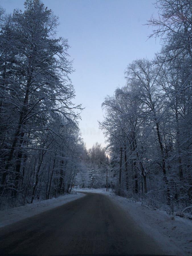 Piękna zimy droga w lasu St Petersburg obraz royalty free