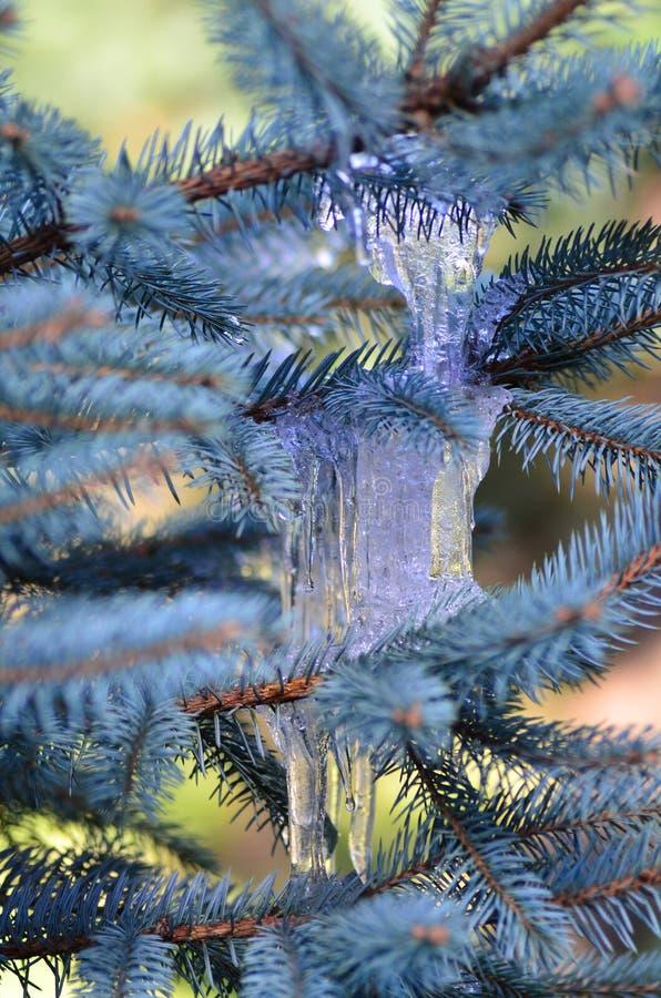 Piękna zimy sceneria zamarznięty drzewo obraz stock