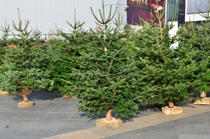 piękne Święta drzew ilustracyjni położenie zdjęcie stock