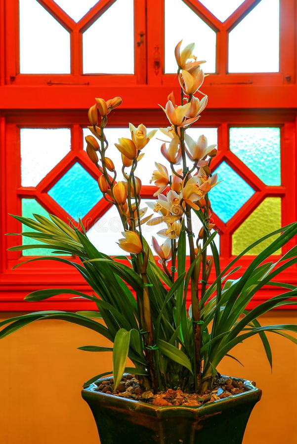 Piękne żółte cymbidium orchidee fotografia stock