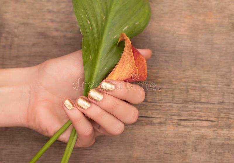 Piękne żeńskie ręki z złocistym gwozdziem projektują mienie kalii lelui obrazy stock