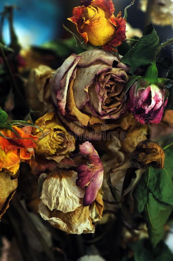 Piękne żywe róże suszyli w bukiet sztuce zdjęcie stock