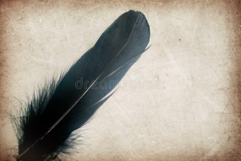 Piękne abstrakcjonistyczne kolor szarość, czerń i upierzają na i tle brązu, białych i tapecie zdjęcie stock