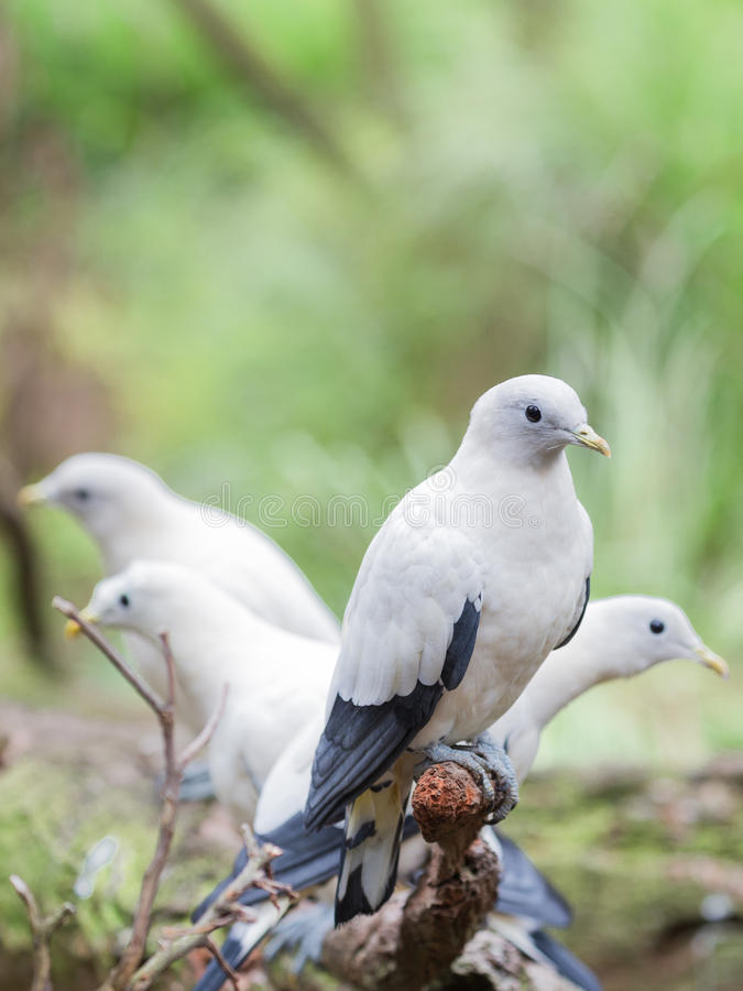Piękne Białe gołąbki fotografia stock