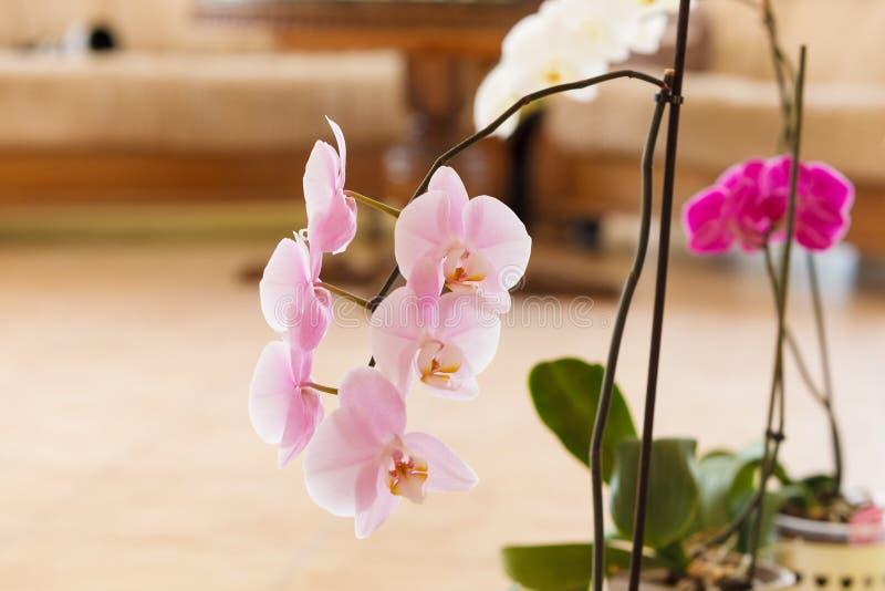 Piękne białe purpur menchii orchidee obraz stock