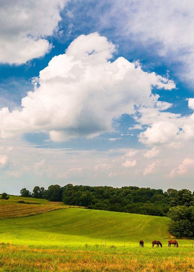Piękne chmury nad koniami w rolnym polu w Południowym Jork Co obrazy royalty free