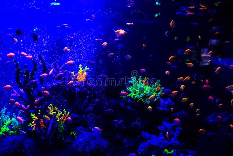 Piękne denne ryby chwytać na kamerze pod wodą pod zmrokiem - błękitny naturalny tło akwarium lub ocean obraz royalty free