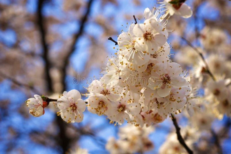 piękne drzewo zdjęcie royalty free