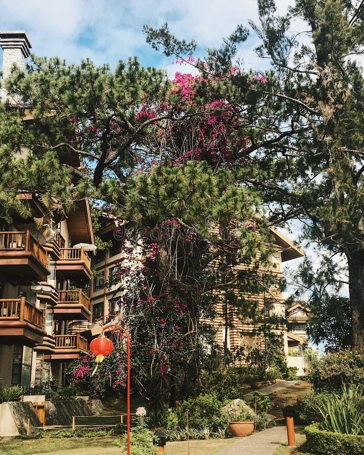 piękne drzewo zdjęcia royalty free