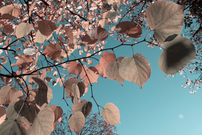 Piękne gałąź drzewo Nad niebieskiego nieba tłem, Tonujący, Horyzontalny strzał, zdjęcie stock