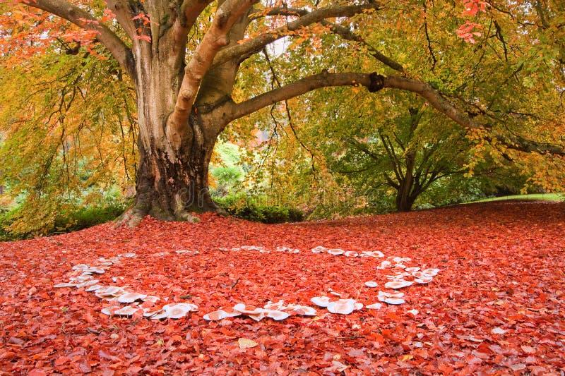 Piękne Jesień Spadek natury czarodziejskiego pierścionku pieczarki obraz royalty free