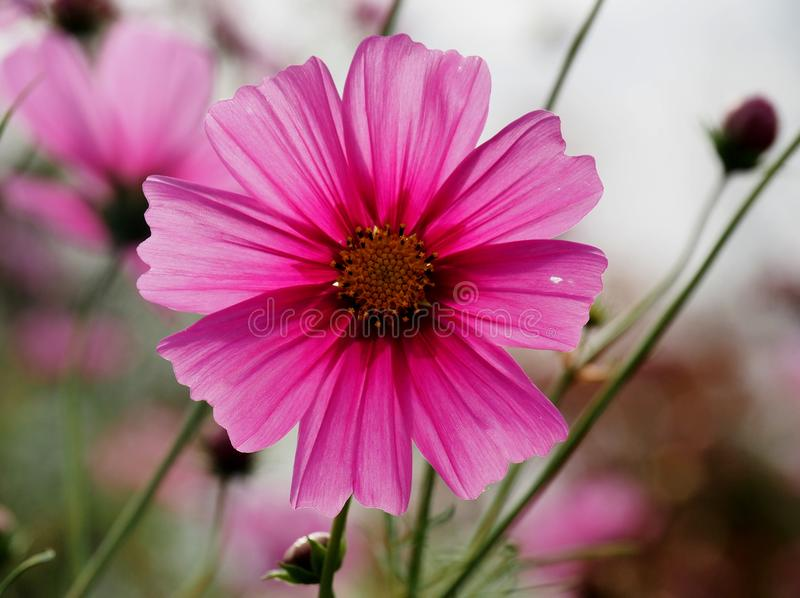 piękne kwiaty łąka pełna zdjęcie royalty free