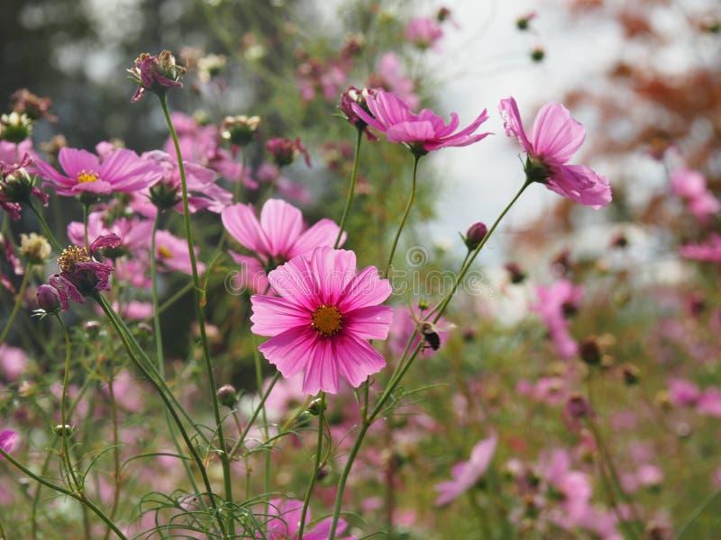 piękne kwiaty łąka pełna obraz stock