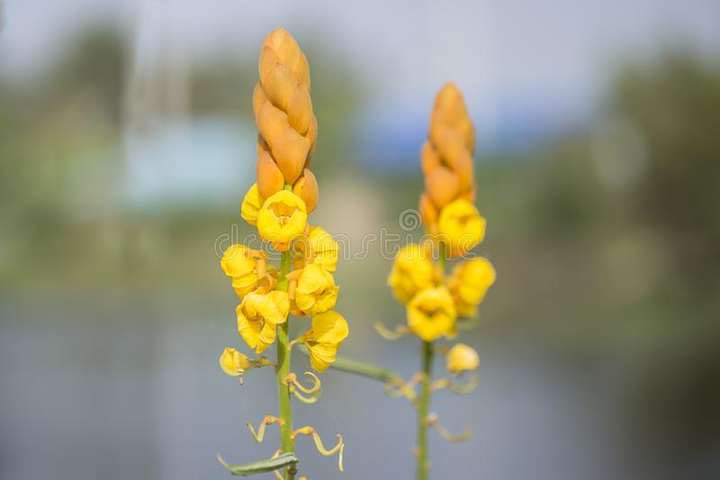 piękne kwiaty żółte obraz stock